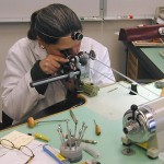 Job Opening: Watchmaker (Hollywood, FLA)